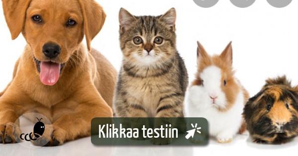 Mikä Lemmikki Testi